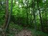 Waldweg am Albtrauf entlang