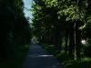 Ehemalige Bahnstrecke nach Honau