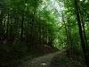 Durch den Wasenwald (Markwasen)