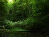 Naturdenkmal Lache