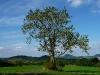 Georgenberg und Achalm unter Baum