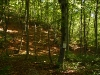 Schmaler Pfad durch den Bannwald