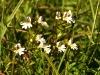Blumenwiese am Pfullinger Berg