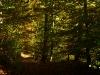 Steil hinab durch den Wald