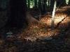 Pilze im Waldlicht