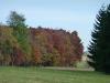 Herbstwald im Kohl