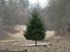 Wie ein Weihnachtsbaum