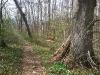 Pfad im Frühlingswald
