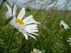 Sommerwiesen im Wind