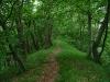 Gratweg zur Ruine Hochbideck