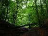 Im Bannwald