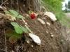 Erdbeerchen am Lippentaler Hochberg