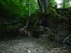 Wurzelwerk an der Reissenbachquelle