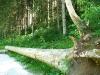 Phänopfad Pfronstetten - Wurzelharfe