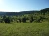 Digelfeld - eine der größten Wacholderheiden der Schwäbischen Alb