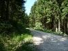 Seltener Nadelwald auf der Alb