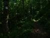 Schmaler Traufweg im Wald