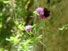 Schmetterling vor dem Fels