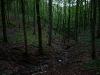 Am Rande des Bannwalds