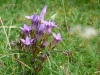 Im Naturschutzgebiet Greuthau