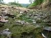 Donauversickerung - diese Fischlein haben es nicht geschafft