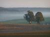 Nebel und Morgensonne bei Sontheim