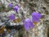 Blüten am Vogelherd