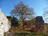 Ruine Hohenwittlingen