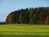 Bunter Herbst auf der Albhochfläche bei Sontheim