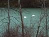 Schwäne auf dem gefrorenen Reutlinger See