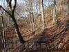 Noch wenig frühlingshafter Waldweg