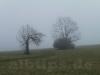 Nebel am Filsenberg