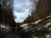Wald und Wacholderheide