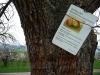 Bevor der Kirschenweg beginnt, lernt man was über Birnen.