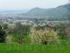 Blick über die Dettinger Kirschenblüte zum Metzinger Weinberg