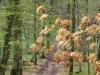 Alt und neu im Wald