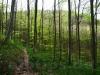 Jägerwegle hinauf zum Roßberg