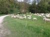 Schafherde im Naturschutzgebiet Listhof