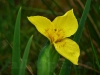 Blüte am Molach
