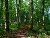 Im Wald beim Lauereckfels