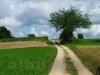Wege durch die Felder