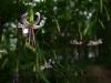Flora am HW1