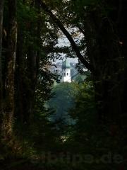 Verwaldete Allee mit Durchblick nach Laiz