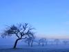 Winterliche Streuobstwiese  bei Sirchingen