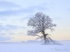 Astbruch – Baum in der Nähe von Donnstetten