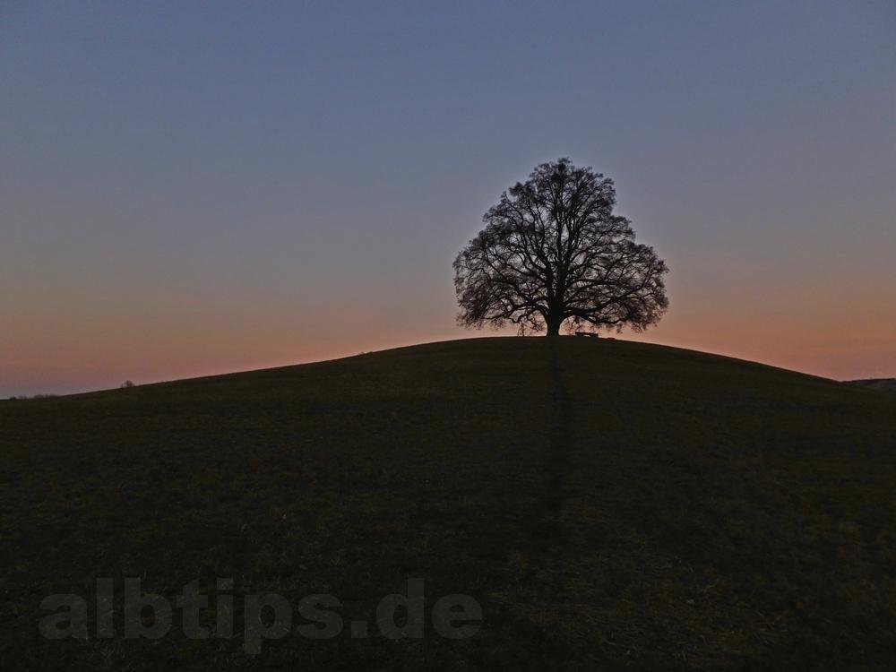 Höchster Weihnachtsbaum Deutschlands.Die Bronnweiler Friedenslinde Und Der Höchste Weihnachtsbaum
