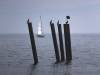 Neuzeitliche Pfähle im Bodensee