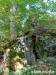 Ruine Neuhewen bzw. Stettener Schlössle