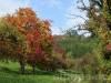 Bunte Obstbäume
