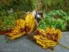 Herbstliche Blätter beim Aachtopf